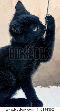 small black fluffy white kitten on a brown background, thoroughbred, three months, with yellow bright big eyes, hunting for a wire from the camera, busy, watching carefully,