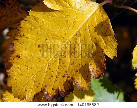 Autumn came. Leaves on a tree began to turn yellow and dry up