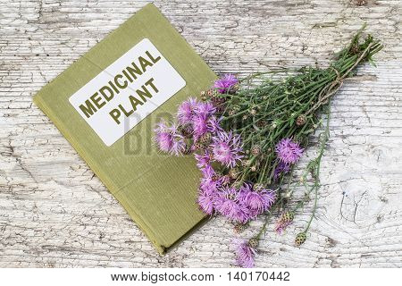 Medicinal plant Centaurea jacea (brown knapweed or brownray knapweed) and herbalist handbook on old table. Used in herbal medicine as well as a good honey plant