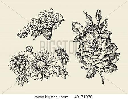Flower. Hand-drawn sketch dogrose, rosehip, wild rose, bird cherry, chrysanthemum Vector illustration
