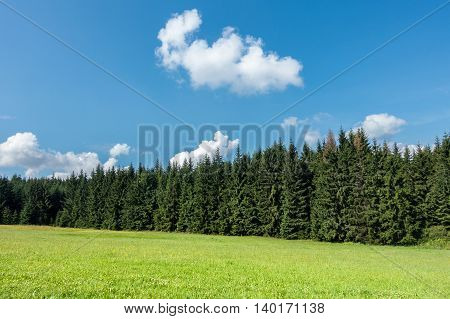 Amazing Summer Day In Nature