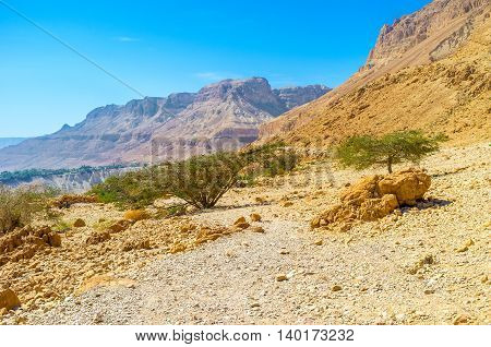 The visiting of Ein Gedi Nature Reserve is the perfect choice to discover the nature of Judean Desert Israel.