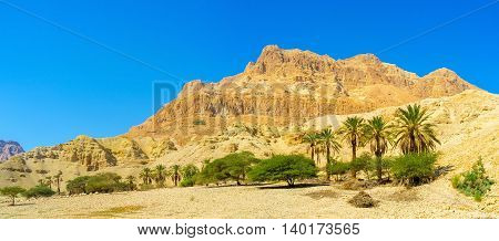The Judean Desert is one of the world's smallest yet most unique desert regions Ein Gedi Nature Reserve Israel.
