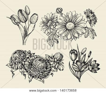 Flowers. Hand-drawn sketch flower, tulip, astra, aster crocus chrysanthemum Vector illustration