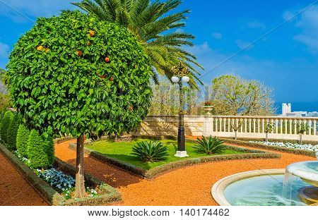 The scenic orange tree with bright fruits in Bahai Gardens Haifa Israel.