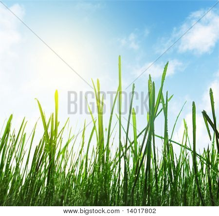 Green wet grass blue sky with clouds and sun
