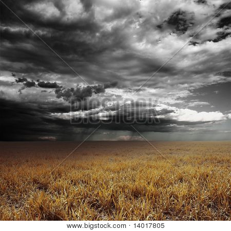 Storm clouds with rain over meadow with yellow grass