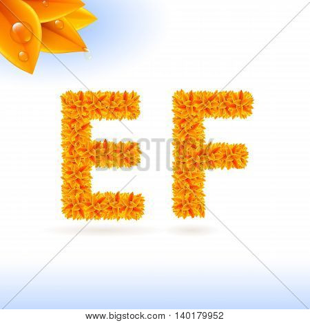 Sans serif font with orange leaf decoration on white background. E and F letters