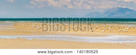 Liani ammos (Ammouliani) at Chalkida in Greece. A beautiful wetland with seagulls. Panoramic view.