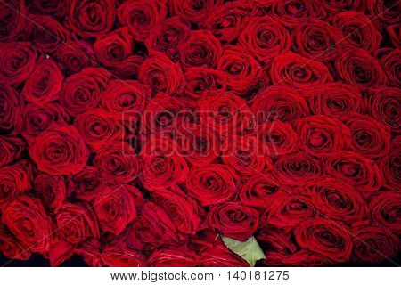 Natural fresh red roses background, love wallpaper