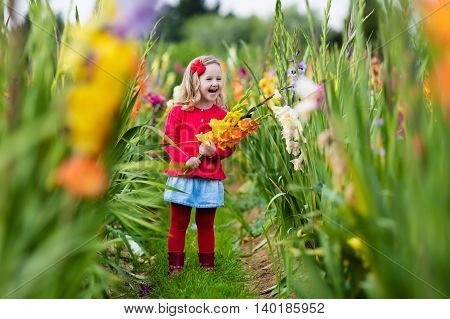 Little girl holding gladiolus flower bouquet. Child picking fresh flowers in the garden. Children gardening in autumn. Kids play in blooming field in late summer or early fall. Kid discovering nature.