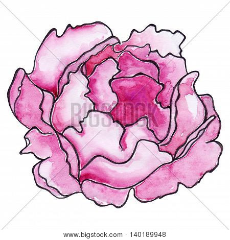 Watercolor crimson peony ink line art sketch isolated