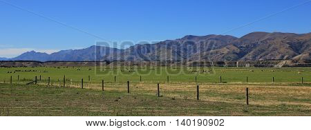 Landscape in Otago New Zealand. Green meadow with sheep. Mountains. Summer scene on the South Island.