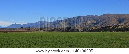 Landscape in Otago South Island. Irrigated green farmland. Dry brown mountains. Summer scene in New Zealand.