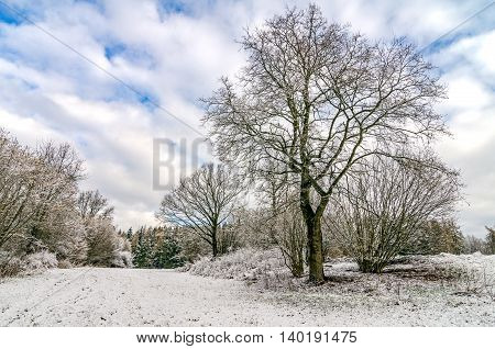 Trees in Winter Landscape Countryside After Snowfall