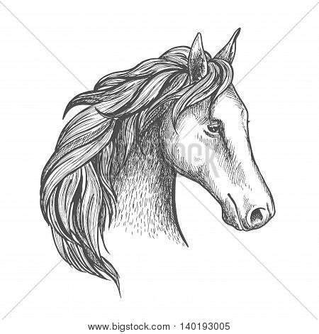 Sketched horse head icon with purebred stallion of arabian breed. Equestrian eventing sporting competition symbol or horse racing badge design