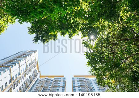 Looking Up At Tree And Building,real Estate Vision Concept