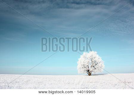 Solo árbol congelado en campo cubierto de nieve