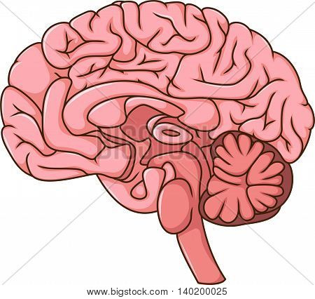 illustration of human brain cartoon for you design