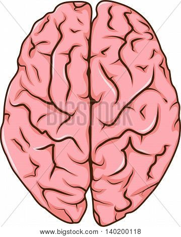human left and right brain cartoon illustration