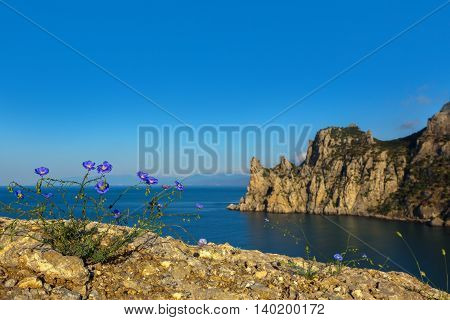Common flax or linseed against the background of mount Karaul-Oba. Beautiful and rich nature of the Crimea.