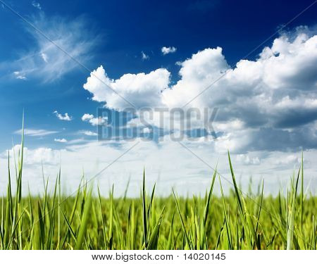 Spring fresh green grass and blue sky with clouds