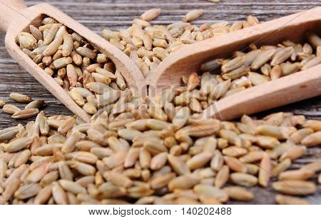 Rye Grain With Spoon On Wooden Background