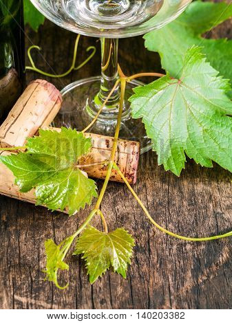 Close Up Of Wine Corks With Grape Vine And Leaves On Wooden Table. Dinning And Wining Concept .