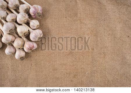Bunch of garlic bulbs on a burlap. Top view.