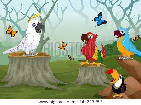 funny birds with deep forest landscape background