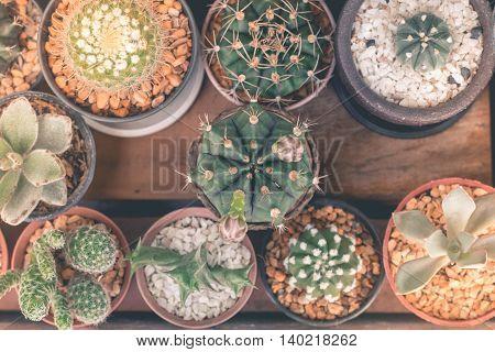 Cactus isolated white background Cute mini cactus