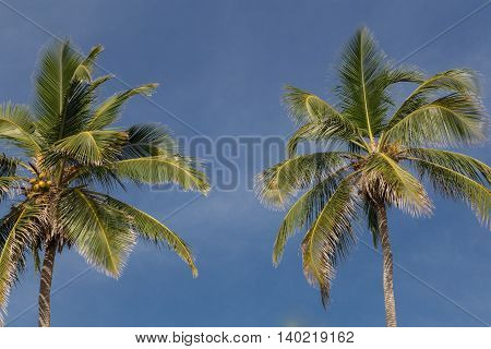 two palms with sky as a background
