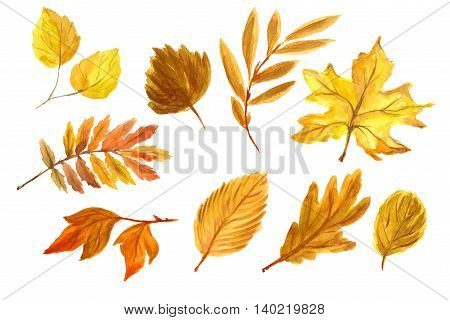 Watercolor hand drawn fall leaves set. Beautiful herbarium for backdrop and decoration. Season colors like red, orange, yellow and green.