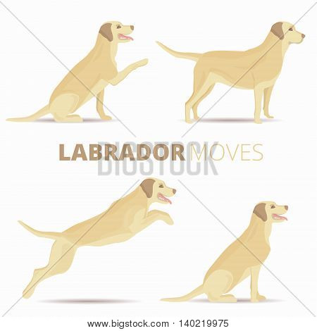 Set of labrador dog breed in various poses isolated. Vector retriever moves illustration