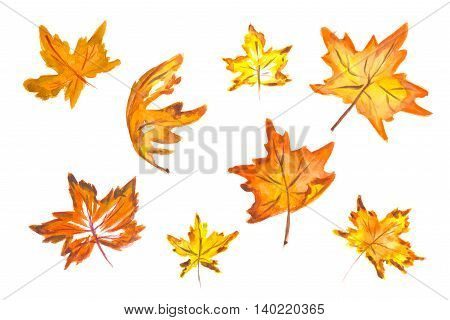 Watercolor hand drawn fall leaves set. Beautiful herbarium for backdrop and decoration. Season colors like red, orange, yellow.