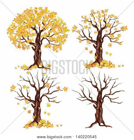 Painted watercolor autumn tree set on white background. Yellow and orange leaves falling. isolated on white
