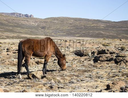Horse feeding next to abandoned village in Lesotho. Artistic retouching.