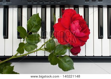 Red rose lying on the keyboard of the electronic piano the top view.