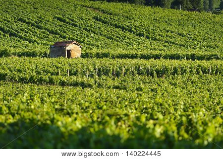 Hut in vineyards of Beaujolais land in France