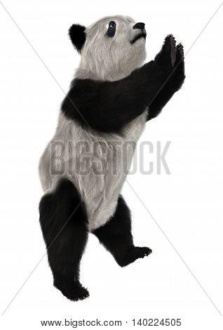 3D Rendering Panda Bear On White