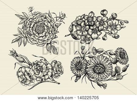 Flowers. Hand-drawn sketch flower, peony, cornflower, knapweed, forget-me-not, carnation clove Vector illustration