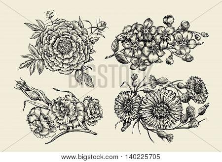 Flowers. Hand-drawn sketch flower, peony, cornflower, knapweed, forget-me-not, carnation clove Vector illustration