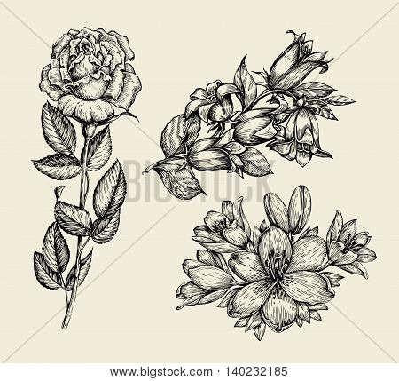 Flowers. Hand-drawn sketch flower bell, rose, lily, floral pattern Vector illustration