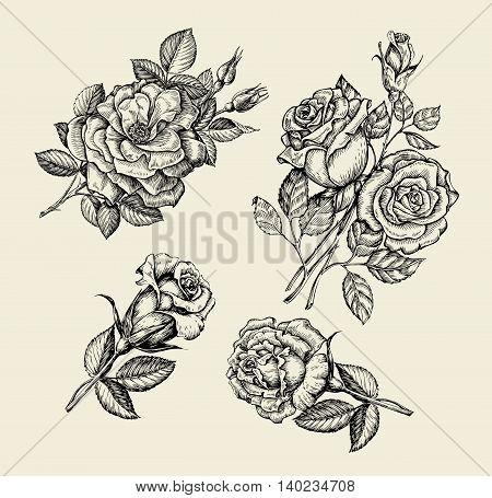 Flowers. Hand-drawn sketch flower, rose, dogrose, rosehip floral pattern Vector illustration