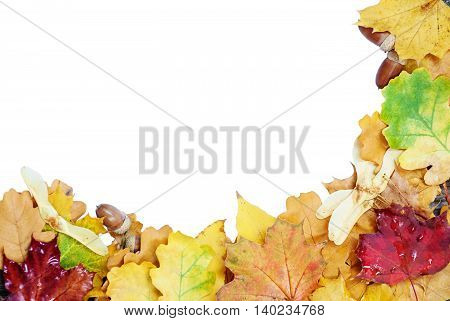 Frame of multicolored autumn leaves isolated on a white background
