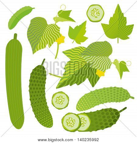 Fresh cucumber set: isolated and cut, leaves, flat illustration