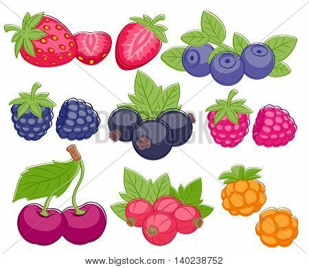 Assorted berries set vector illustration. Sweet juicy strawberry cherry blueberry raspberry black and red currant bilberry blackberry cloudberry isolated on white background.