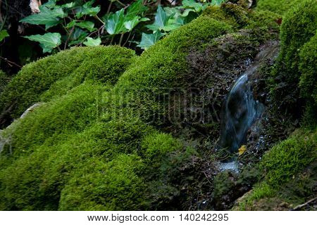 small beautiful waterfall with vegetation summer day