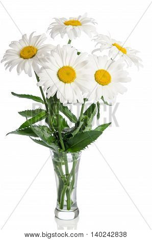 bouquet of beautiiful daisies on white background