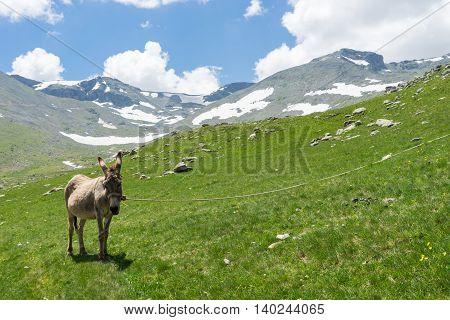 Summer Mountain View To Highland Giresun - Turkey